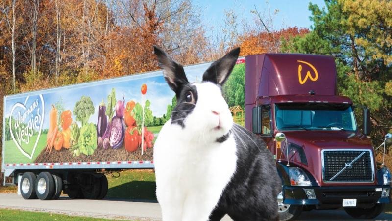 Rabbit excited to see Wegmans veggie truck in the wild