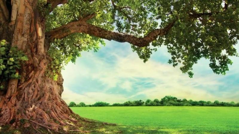 ЖИЗНЬ НА НОВОЙ ЗЕМЛЕ КАК ДОСТИЧЬ СОСТОЯНИЯ БЕЗУСЛОВНОЙ ЛЮБВИ