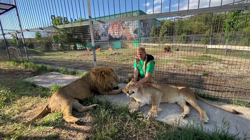 Отдыхаем вместе с львами Малышом и Мамой Чоли