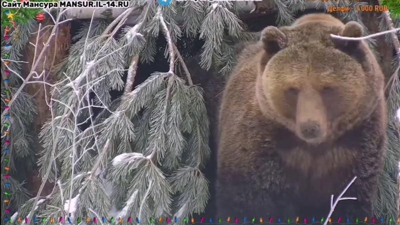 Где мне сегодня спать ♥️ Медведь Мансур ♥️