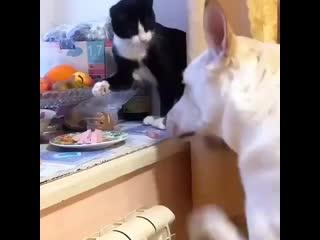 Какой послушный собакен!С тарелки не ворует,ест только то,что ему кот выдал!