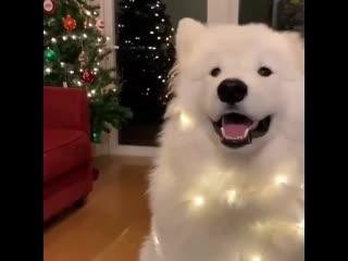 У собаки тоже Новый год