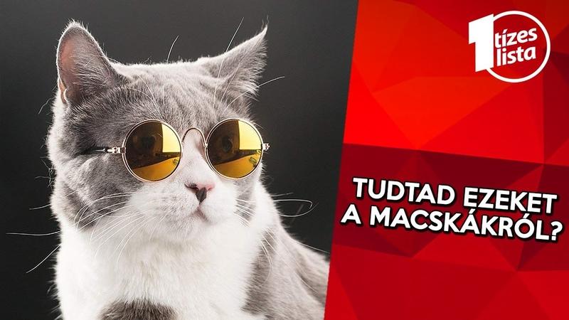 10 érdekesség a macskákról amit eddig talán nem tudtál Állatvilág 4