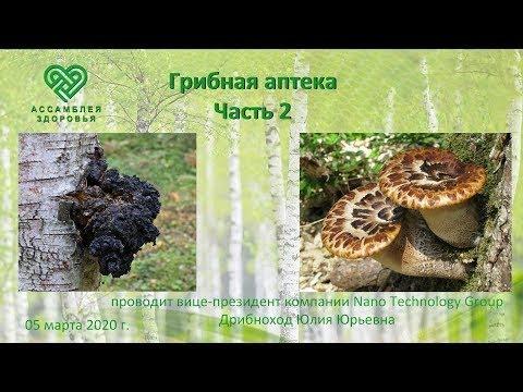 Виоргоны и виофтаны и Грибная аптека, часть 2. Свойства грибов чага и трутовик чешуйчатый