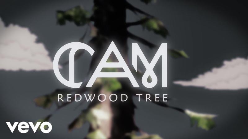 Cam Redwood Tree Behind The Scenes