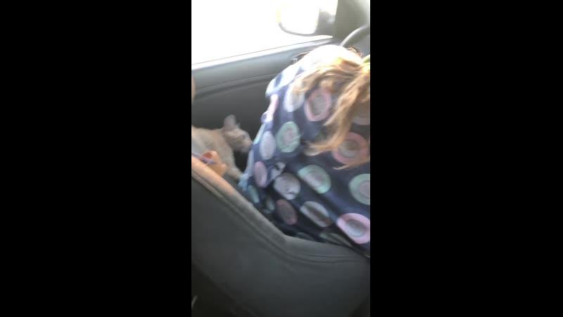 Кошка Дикая Роза идет в атаку