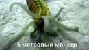 Удивительное существо подводного мира. Морской огурец