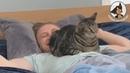 Прикольные и смешные котики 😂😍😊 Кот и маленькая собачка Сторожевой кот 😂