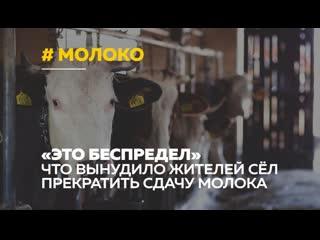 Жители алтайских сёл объявили забастовку из-за низких закупочных цен на молоко