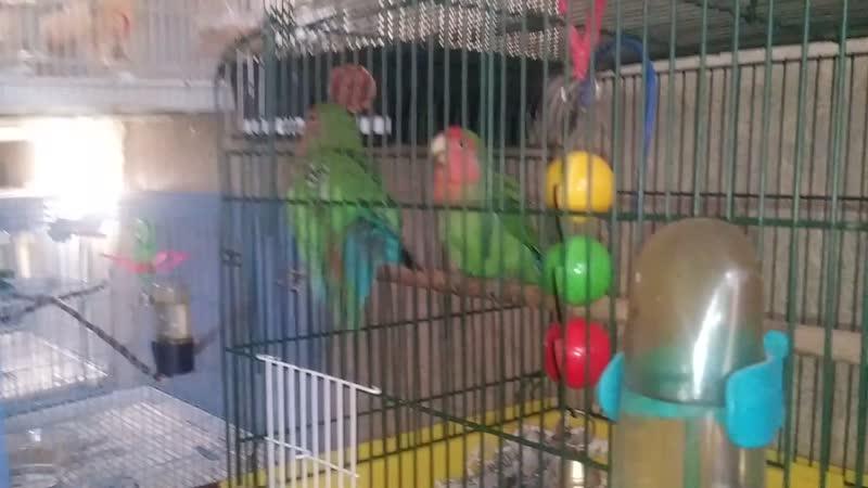 Birds 2020 VS Dima