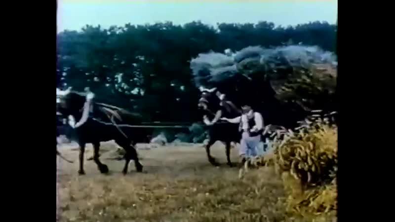 В борьбе за выживание La lutte pour la vie 1914 Русские субтитры