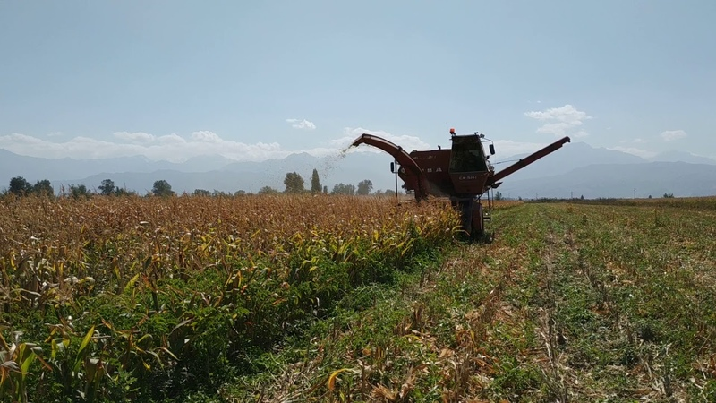 уборка кукурузы на нива ск 5 м1 с жаткой ппк 4
