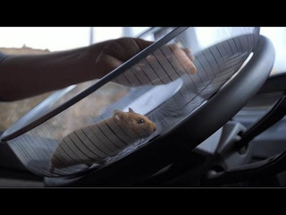 Volvo Trucks - The Hamster Stunt (Live Test)