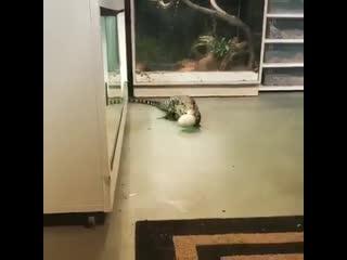 Обосраться! Как его можно дома держать