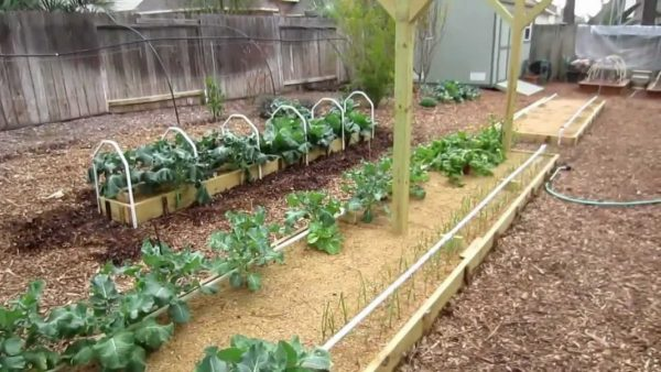 Опилки для огорода, как правильно использовать Какая польза от опилок