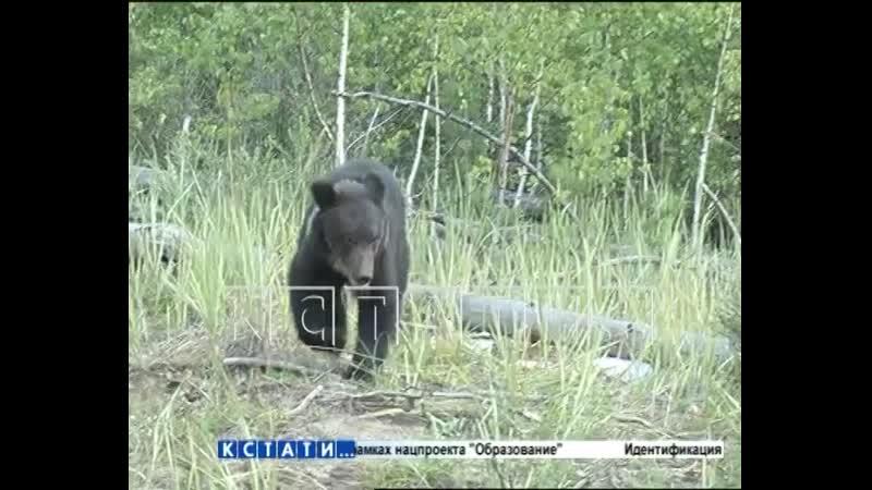 Медвежат, родившихся в зоопарке, выпустили сегодня на волю.