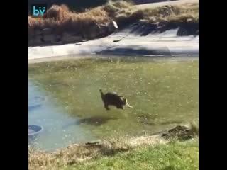 Да, что с этой рыбой не так