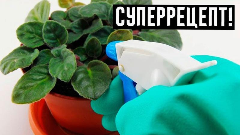Это средство реанимирует любое растение за одну ночь