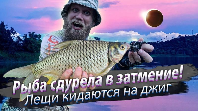 Рыбалка в солнечное затмение Лещи кидаются на джиг Павлиний окунь распушил горб