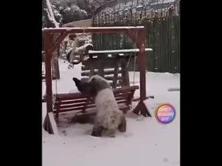 Панда - самое милейшее животное