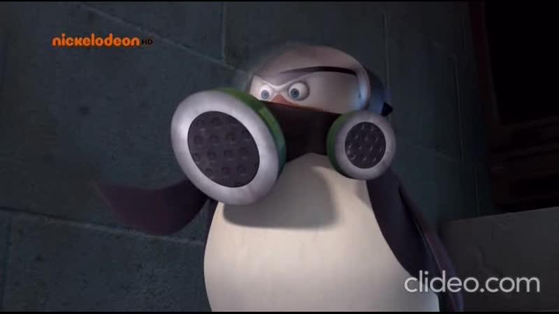 Пингвины из Мадагаскара Карантин