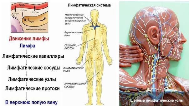 Паровая баня для очистки крови и лимфатической системы Паровая баня в отличии от простой ванны и сауны или турецкой бани, является отличным союзником для очищения тела простым и естественным