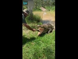 Лайфхаки на каждый день! Как правильно кормить крокодила