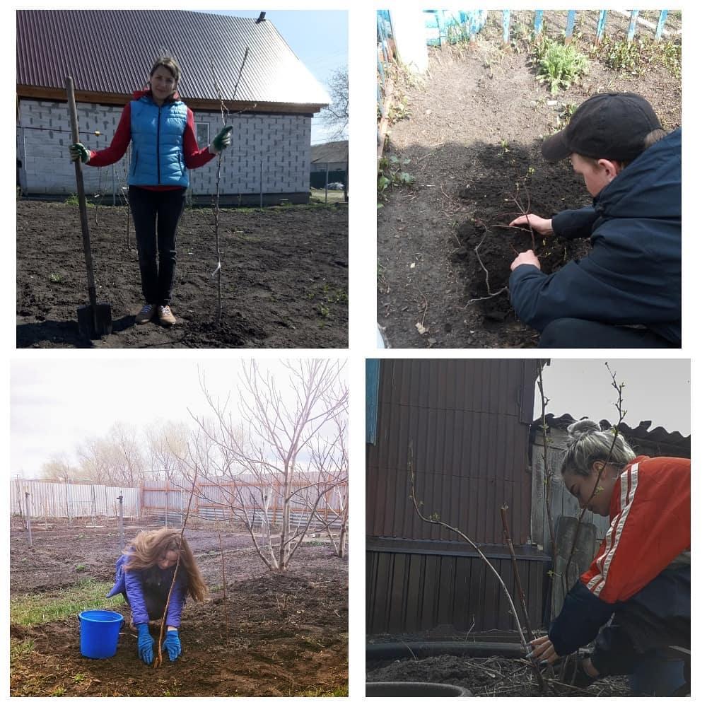 Ученики школы №2 Петровска присоединились к Международной акции «Сад памяти»