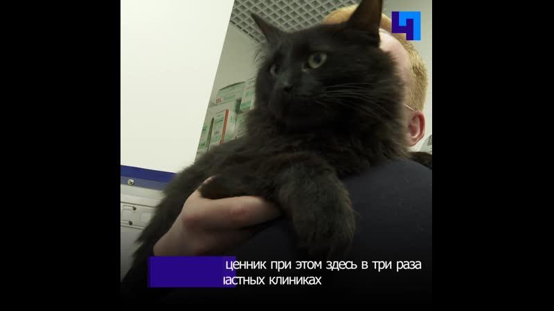 В Ломоносовском районе после ремонта открылась ветеринарная клиника