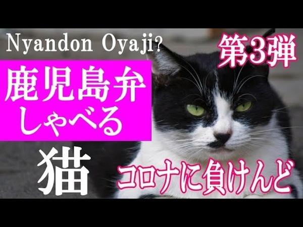 第3弾! 鹿児島弁しゃべる猫*コロナに負けんど!にゃんどんオヤジ?応援メッセージ|A cat who speaks Kagoshima dialect ネコの注意喚起!後に続きました