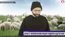 В Дагестане родился баран с человеческим лицом! Интервью овцевода