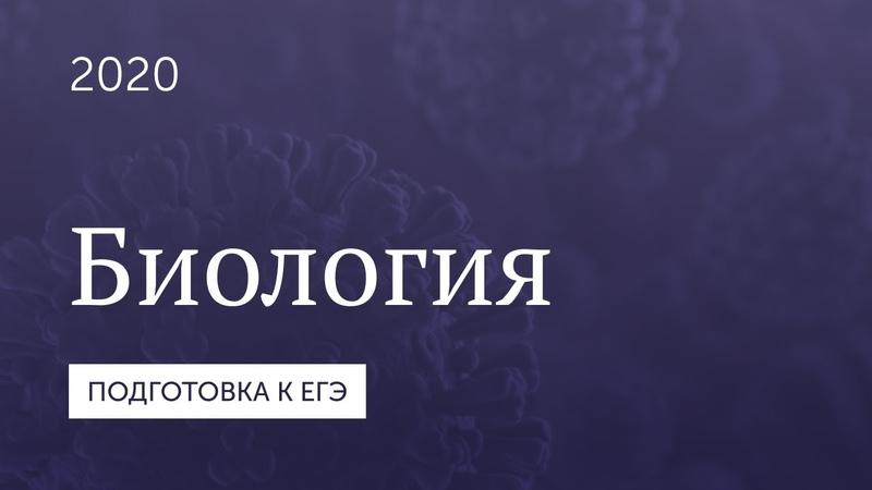 Подготовка к ЕГЭ 2020 Биология Часть 11