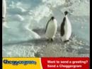 Веселый пингви