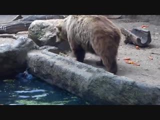 Животные помогают друг другу bdjnyst gjvjuf.n lheu lheue