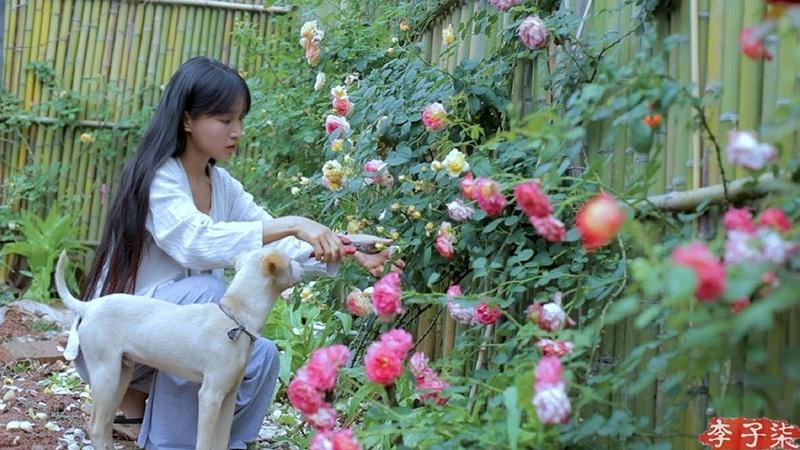 (笋)Best Time of Year to Comsume Juicy and Tender Bamboo Shoots; Pick As Much As You Like|Liziqi