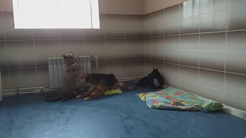Инвалиды спинальники Аза Олимп Граф Ханна Клякса заехали в отремонтированные помещения второй очереди станции скорой помощи