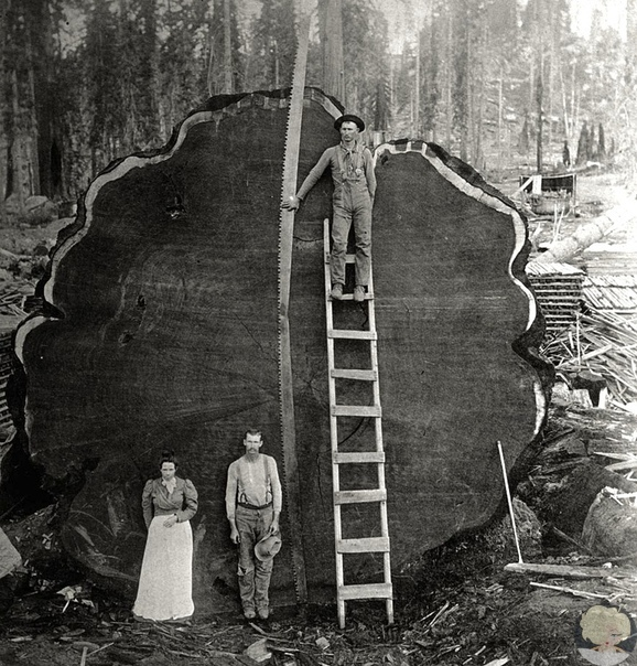 Дерево эпох