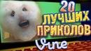 Лучшие Приколы Vine! (ВЫПУСК 17) [17 ]