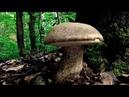 7.6.2020 Krásná nedělní houbařina - začínají další druhy hub.