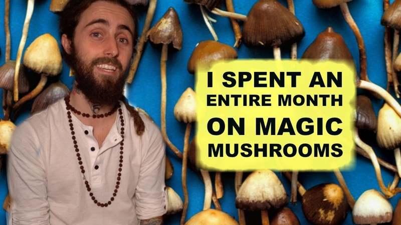 I Spent a MONTH on Magic Mushrooms My Experience