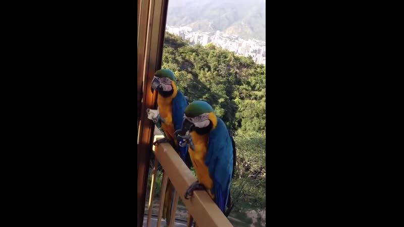 Попугаи прилетают полакомиться