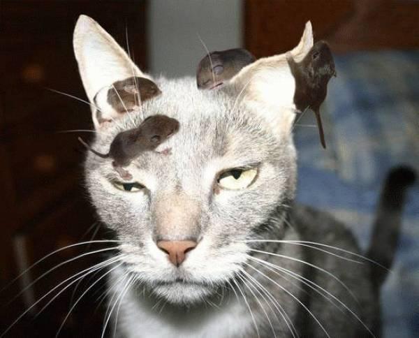для всех, кто считает, что кошки и мыши - заклятые враги.