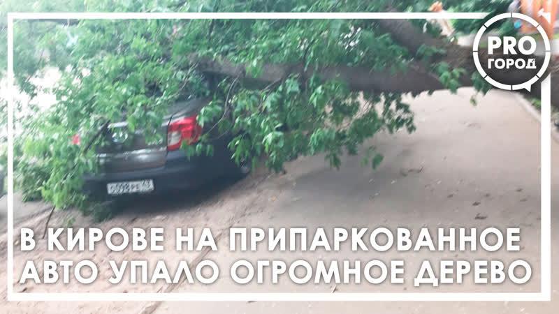 В Кирове дерево упало на иномарку