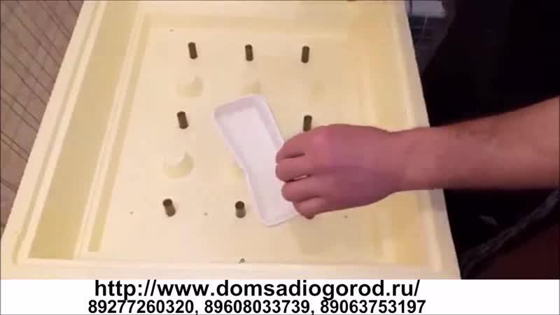 Инкубатор домашний для цыплят Золушка 70 яиц 220 12 В автоматический переворот