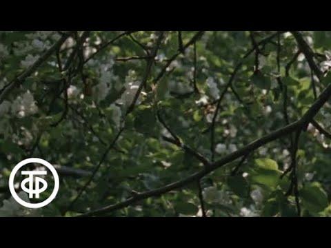 Май Из цикла Двенадцать месяцев на музыку Времена года П И Чайковского 1977