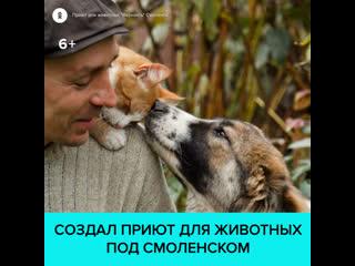 Как в деревне под Смоленском появился приют для животных  Москва 24