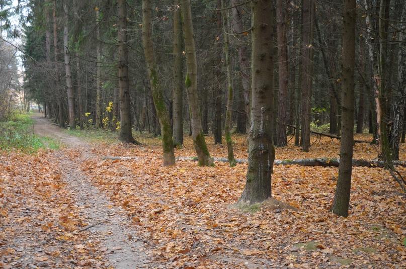 Заключение по вопросу строительства участка автомагистрали «Солнцево-Бутово-Видное» в границах Ульяновского лесопарка, изображение №1