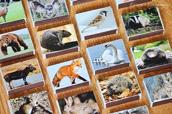 КОРОБОЧКИ ЛЕСНЫЕ ЖИВОТНЫЕ. КТО ЧТО ЕСТ Изготавливается из спичечных коробков. сверху клеим изображение животного, внутри его любимая еда. Файл можно скачать под