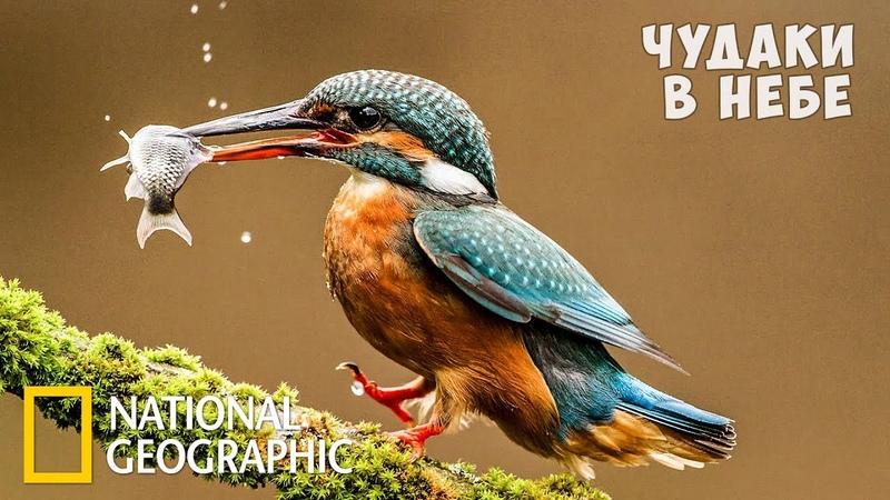 Самые странные животные в небе National Geographic