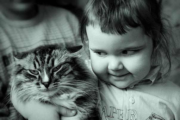 А они ведь умнее! Предыстория: У меня мелкая сестра очень любит тискать кота. Он идет мимо, она вопит: «Вася!!!» и обнимать его так, что у бедолаги аж кости трещат. И так раз по 7-8 в день.